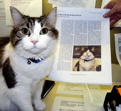 20100203 death cat as well Frosty The Snowman Gets Caught Humor additionally Article4802241 besides Index php also Stowaway Greek Cat Flies From Athens To Zurich On Airplane Undercarriage. on oscar nursing home cat