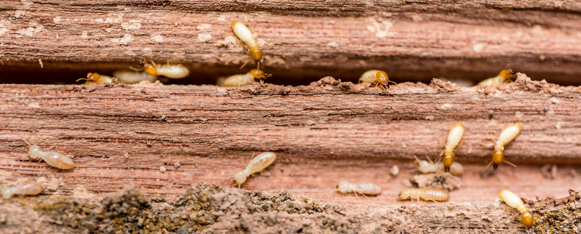 9 tips when doing a diy termite inspection