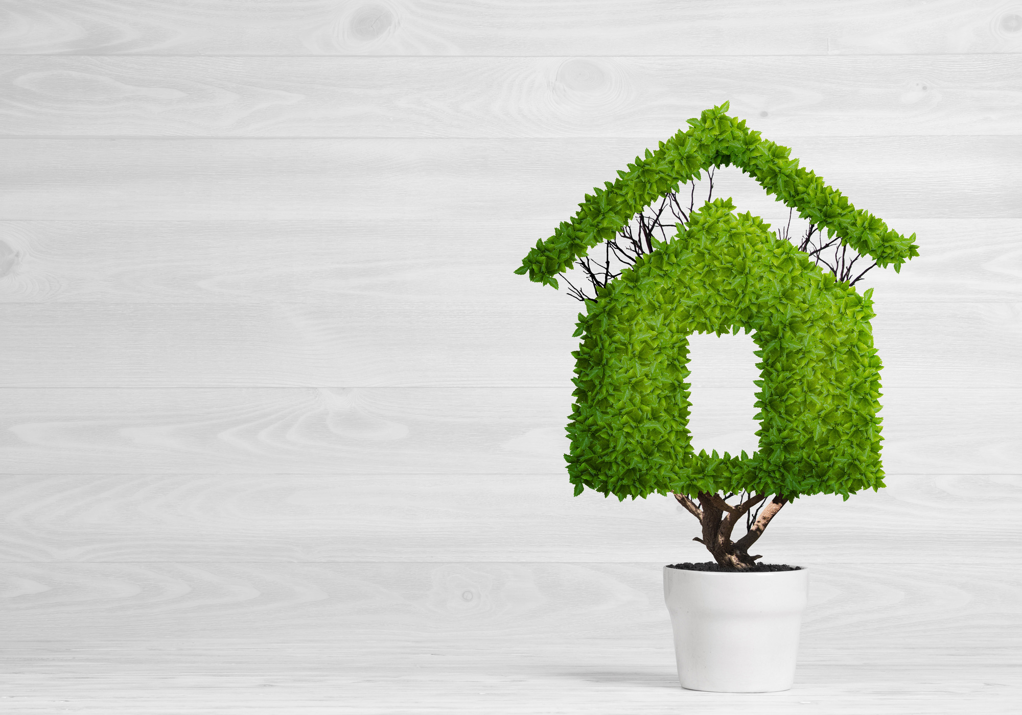 Green Home Design in 2019: 8 Eco-Friendly House Ideas You Need to ...